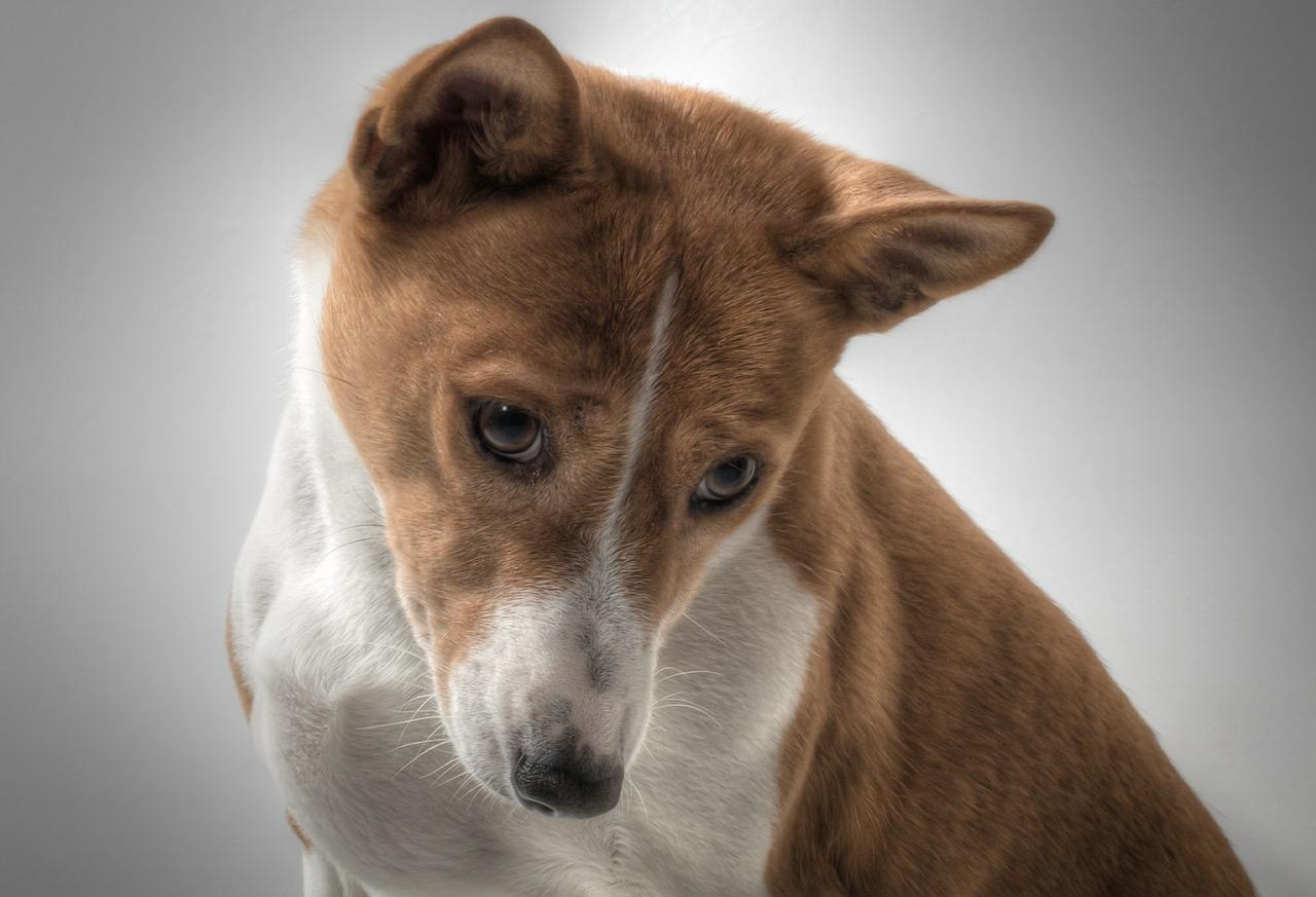 20 razze di cani più antiche
