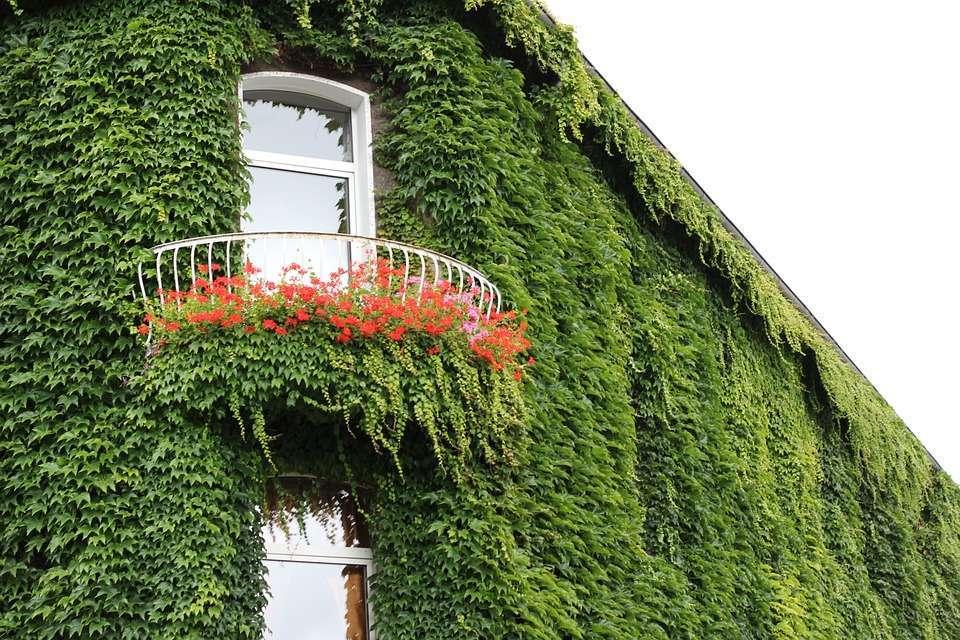 Piante da balcone sempreverdi: i diversi tipi e le cure [FOTO ...