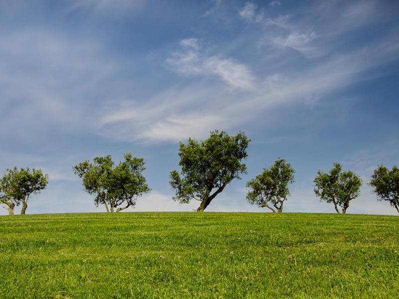 Come potare gli alberi
