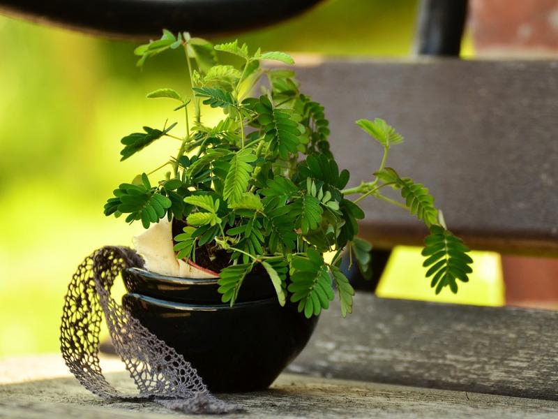 Come proteggere le piante dal caldo