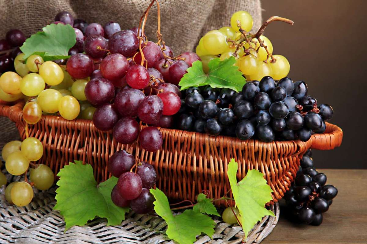 Cosmetici all'uva: i migliori prodotti da provare [FOTO]