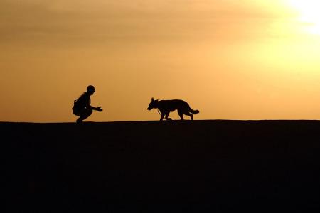 Cane umano