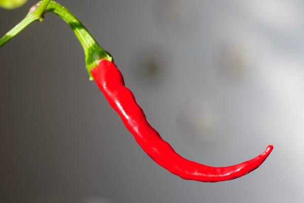Peperoncino rosso fuoco