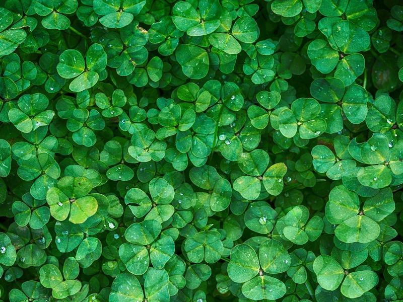 Come creare un antiparassitario per le piante