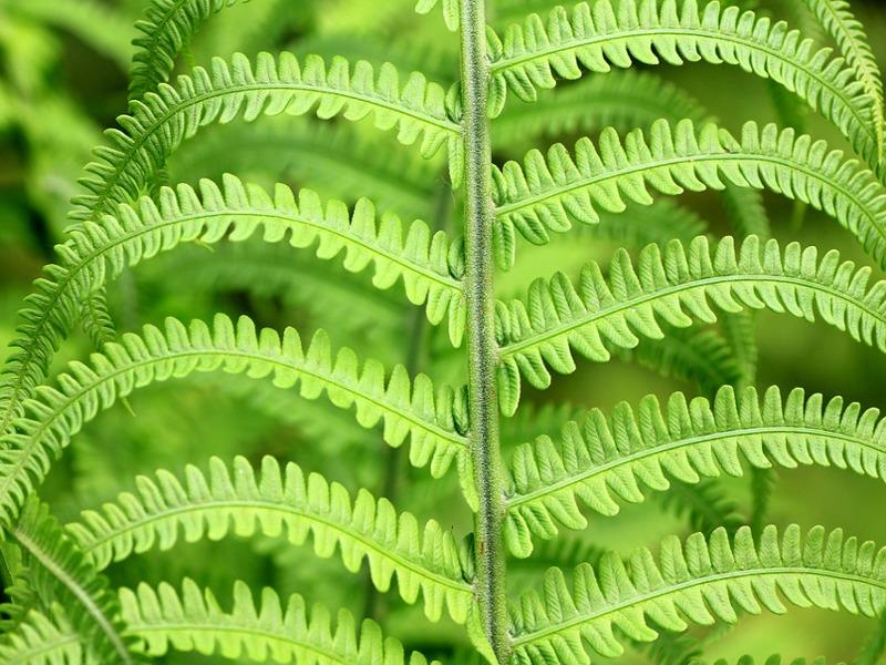 Come curare le piante con la cocciniglia