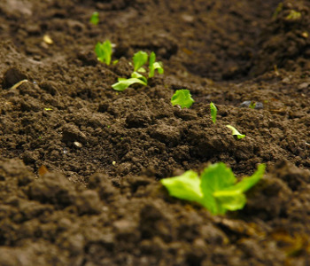 Terreno coltivazione