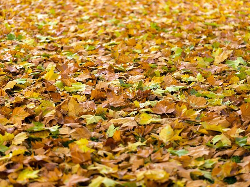Foliage in Italia: i luoghi magici della caduta delle foglie