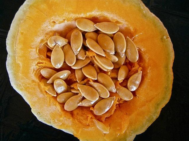 zucca semi