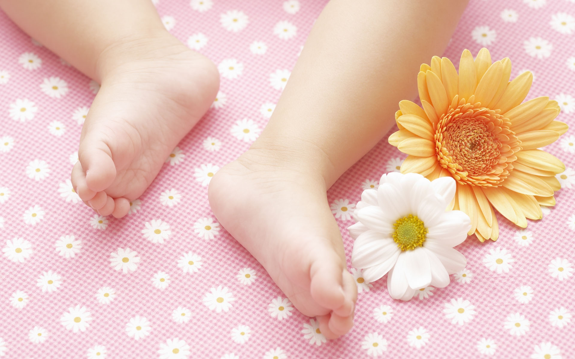 Fiori e piante da regalare per la nascita di un bambino