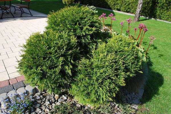 Come realizzare un giardino roccioso piante pietre e consigli foto pourfemme - Realizzare un giardino ...
