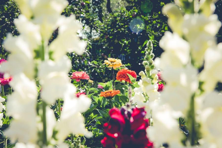 Le piante che crescono velocemente