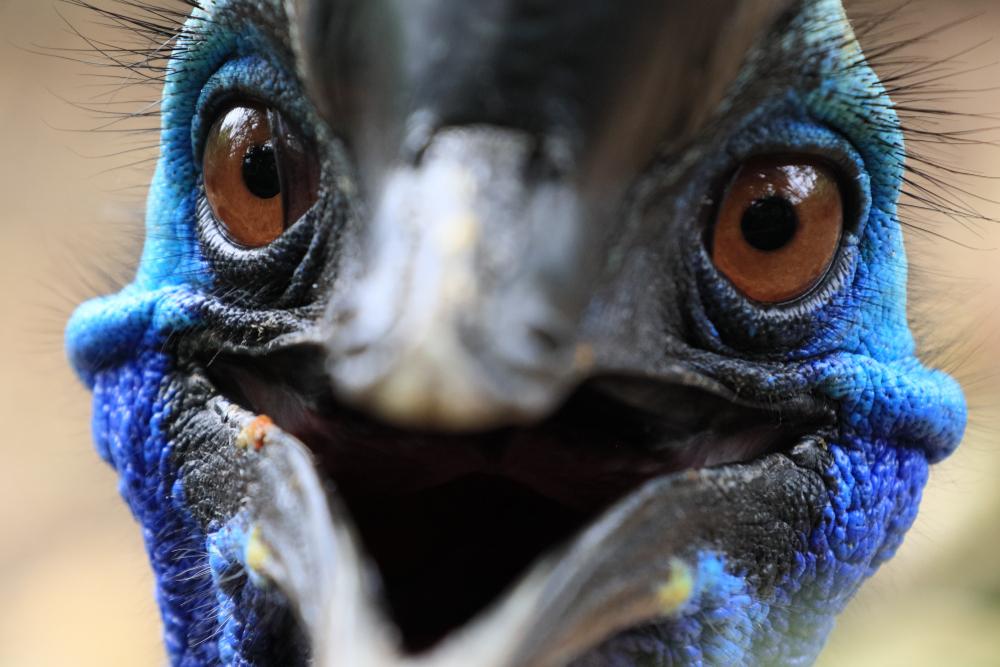 Animali strani nel mondo: l'elenco dei più rari e curiosi [FOTO]