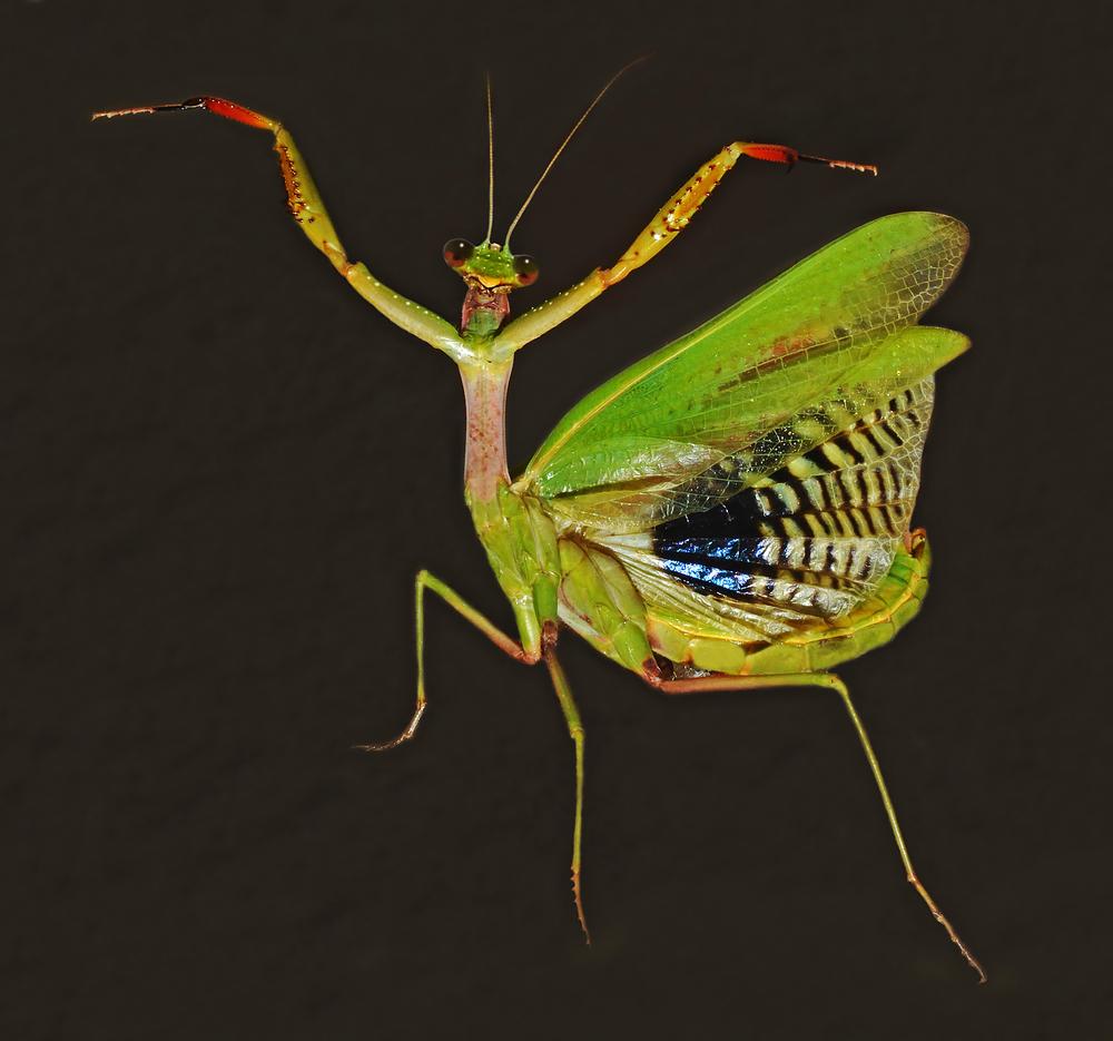 insetti strani