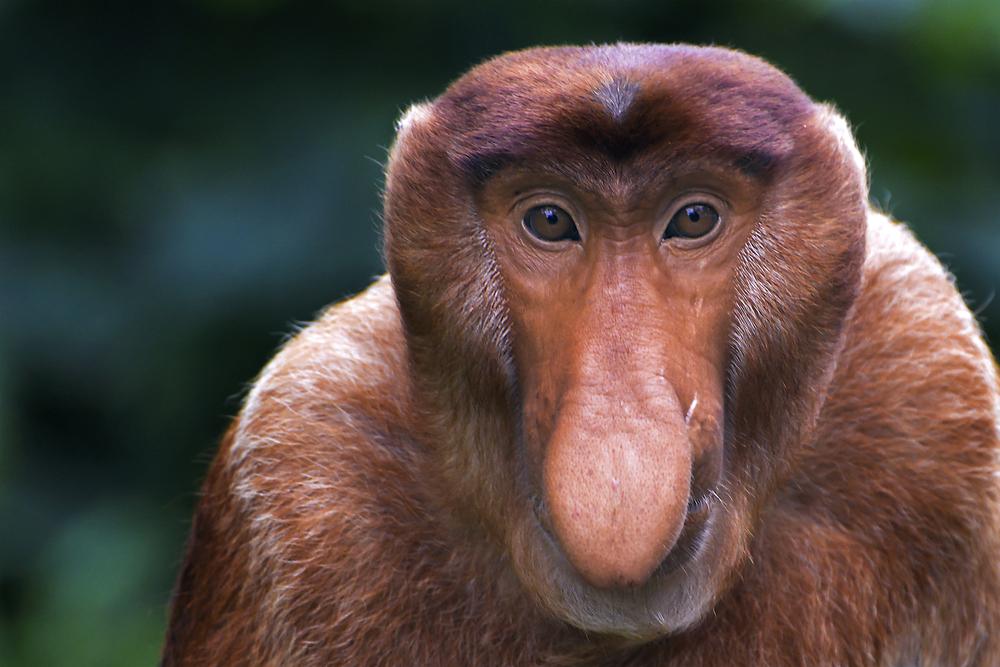 scimmia strana