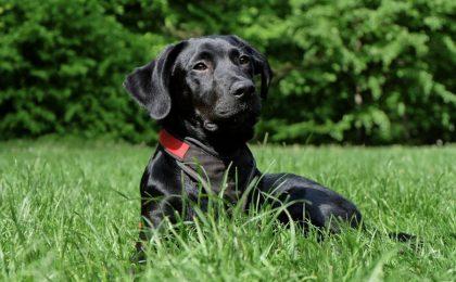 Le razze di cani più affettuosi: la classifica