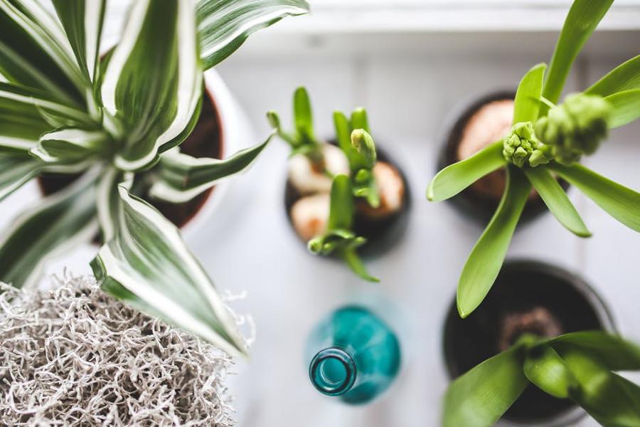 Come far rinascere le piante secche