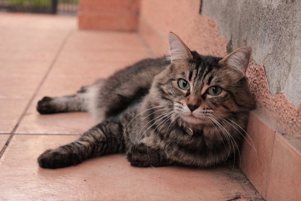 gatto-dimezza-allergie
