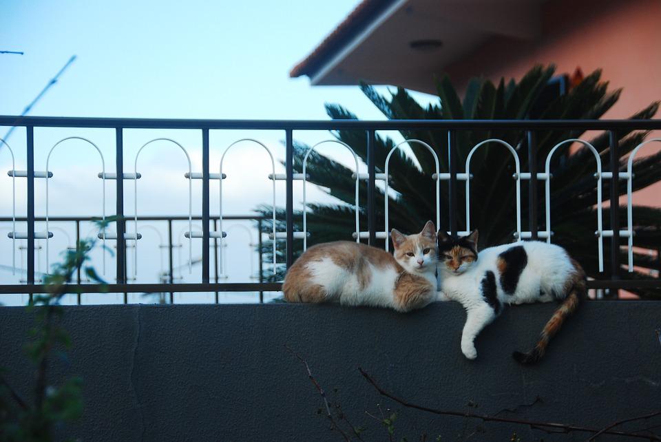 gatto-allontana-depressione-migliora-umore