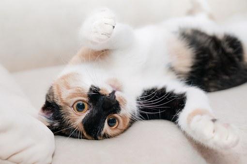 gatto-riduce-rischio-malattie-cardiache