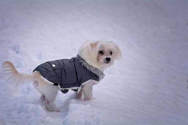 Cane piccolo cappottino