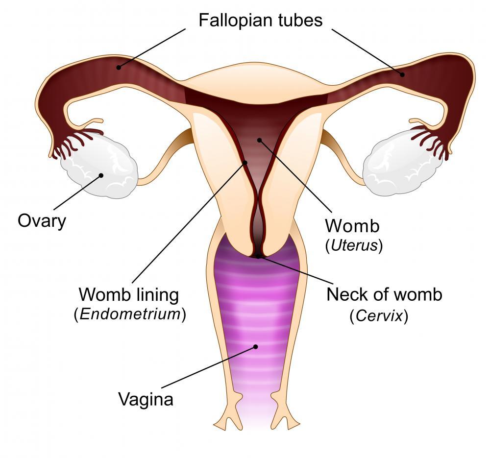 Ritardo mestruazioni: possibili cause