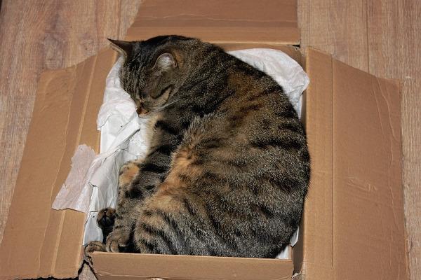 Cuccia in cartone per gatto