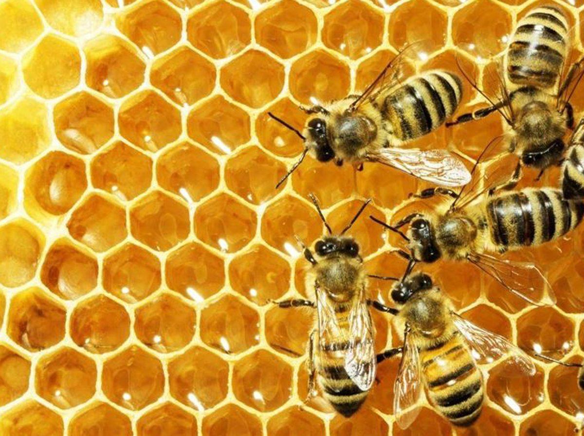 cera d'api naturale come utilizzarla