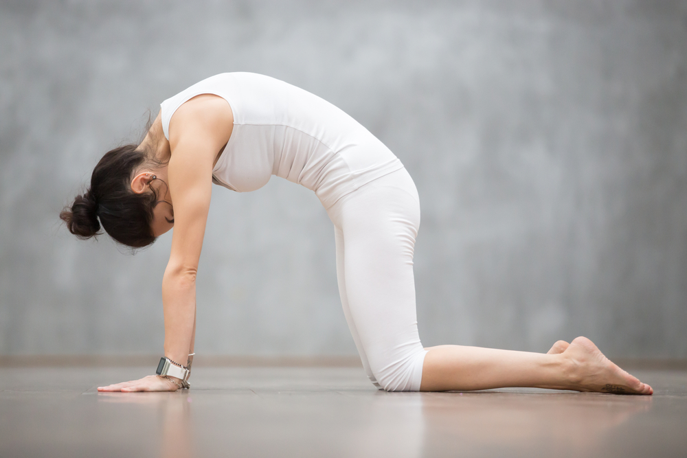 posizione yoga gatto