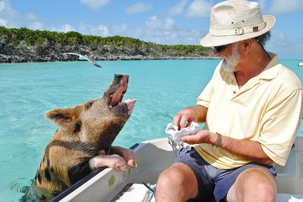 Maialino e turista a Pig Beach