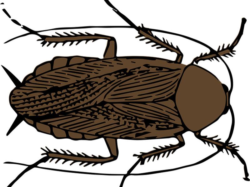 Rimedi naturali contro gli scarafaggi, come allontanarli?