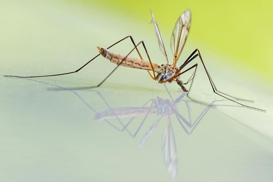 Trappole per zanzare fai da te efficaci: come farle in casa