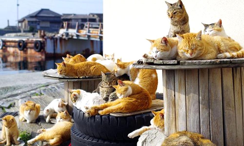 Giappone, l'Isola dei Gatti: un posto dove ci sono più felini che persone