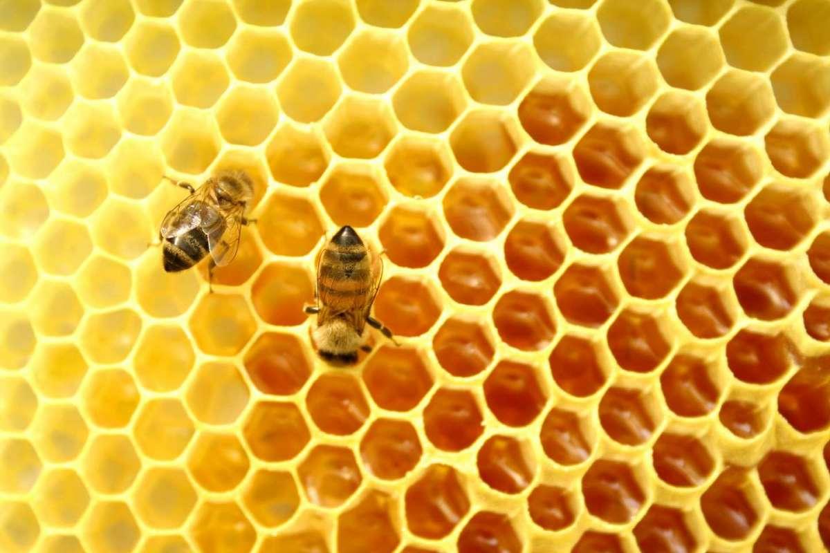 Cosmetici al veleno d'api: i prodotti da provare