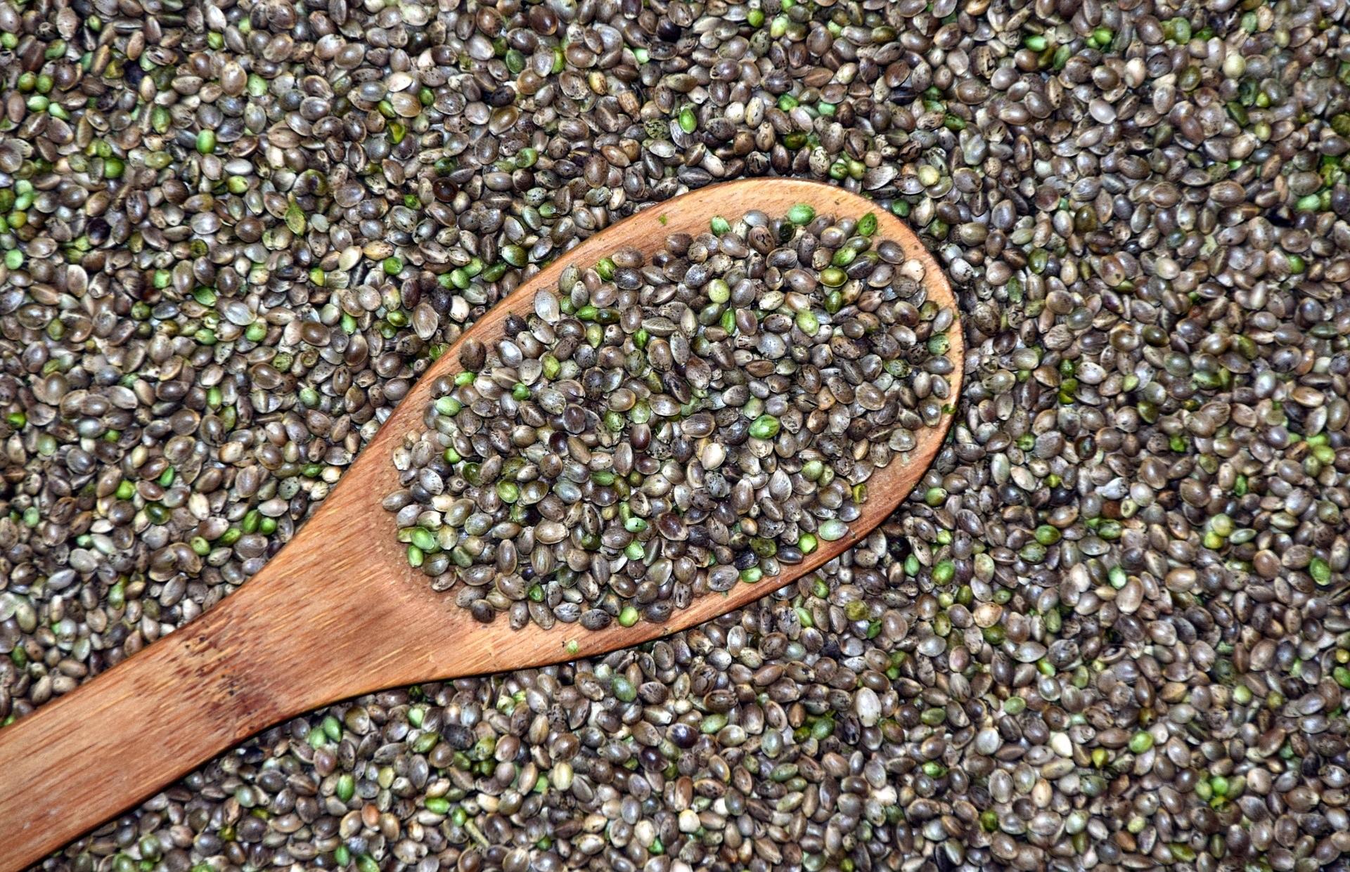Come usare i semi di canapa per dimagrire: i consigli utili