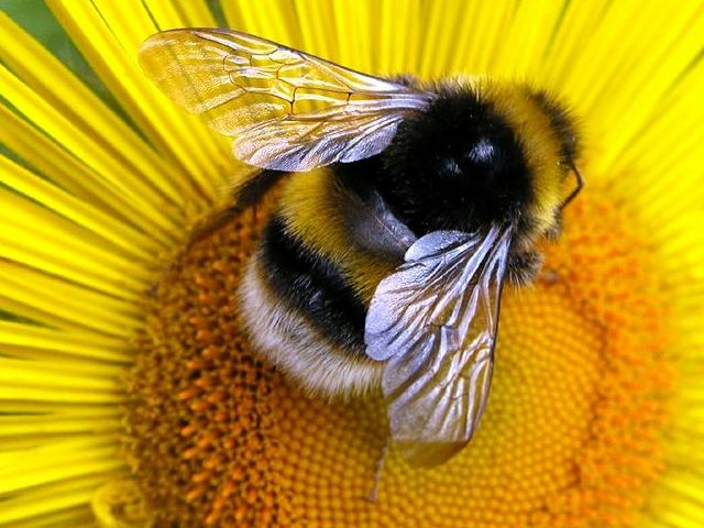 veleno api proprieta
