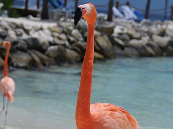 Fenicottero Flamingo Beach