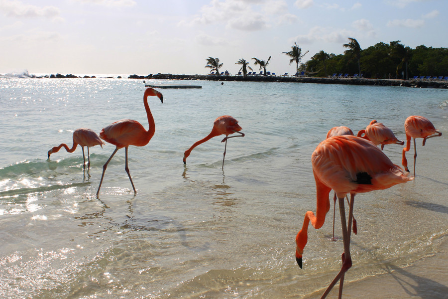 La spiaggia con i fenicotteri: la Flamingo Beach che piace a tutti