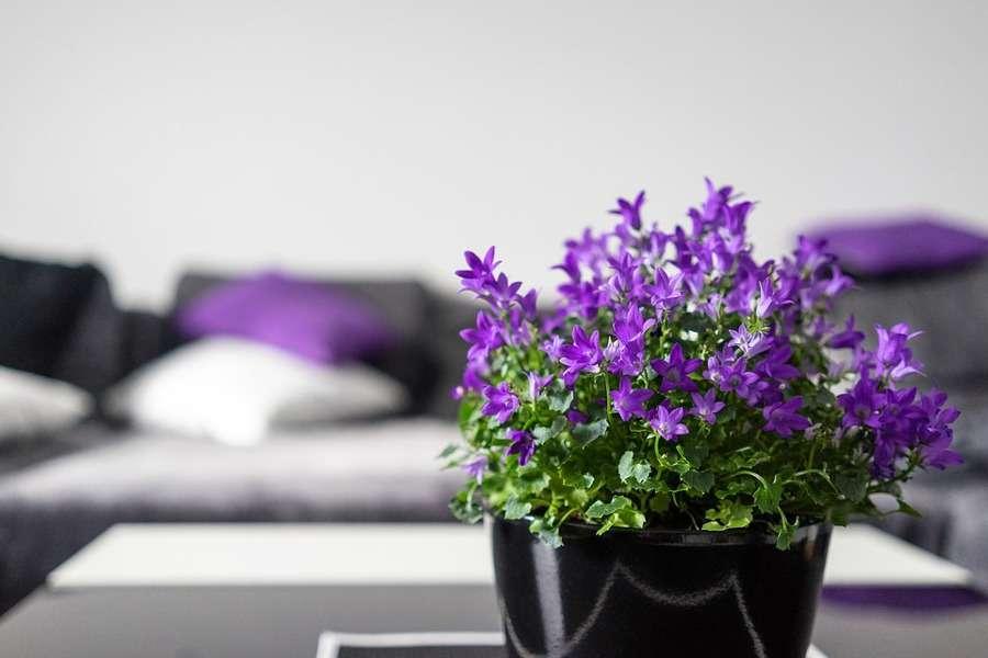 Arredamento in viola per la casa: idee di design