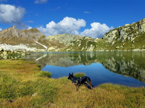Alta montagna cane