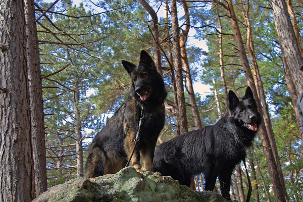 Cani vacanze montagna