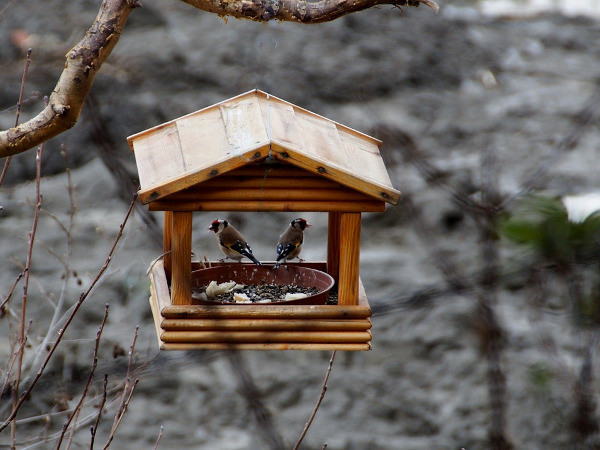 Casetta di legno per uccellini