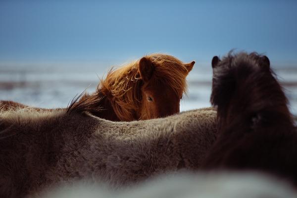 10 cose che non sai sui cavalli