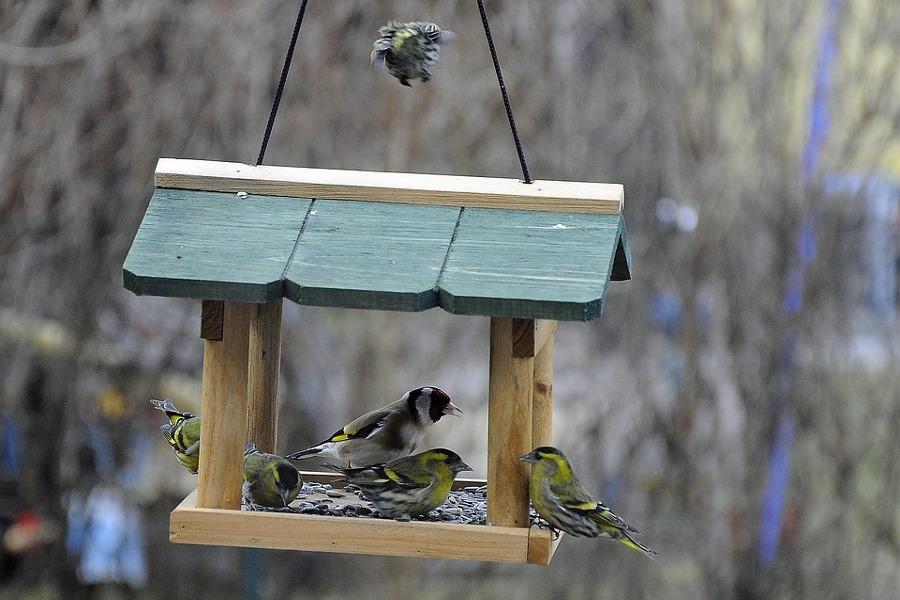 Come creare una mangiatoia per uccellini