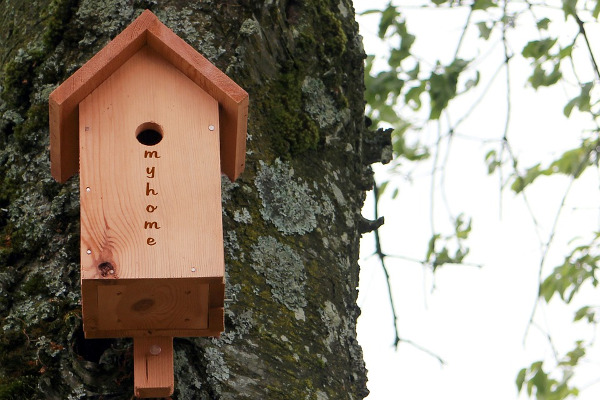 Mangiatoria per uccellini albero