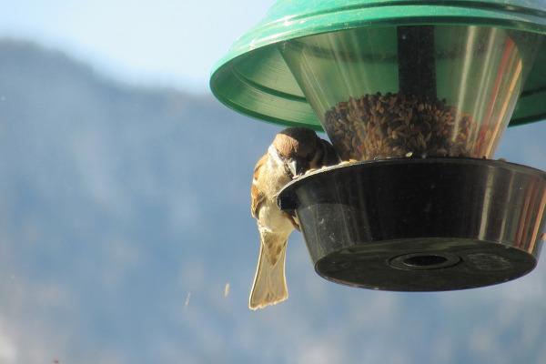 Mangiatoria per uccellini in plastica
