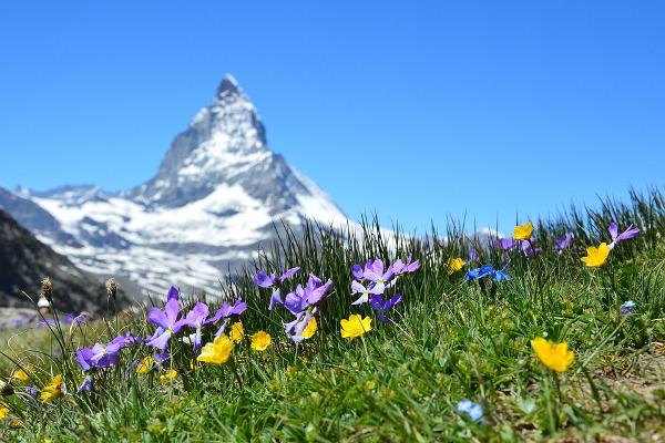 Svizzera viaggio montagna