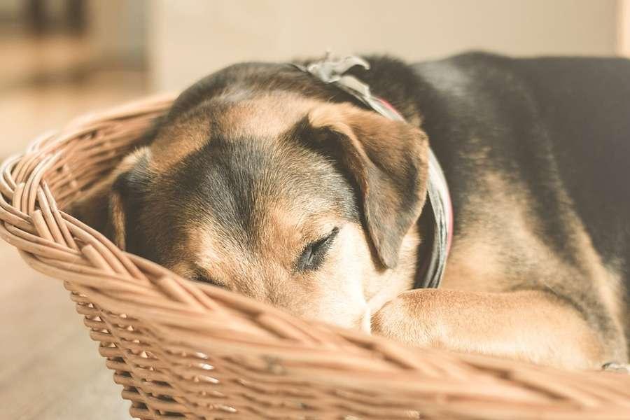 Le cucce per cani più belle da interno e da esterno: i modelli da provare