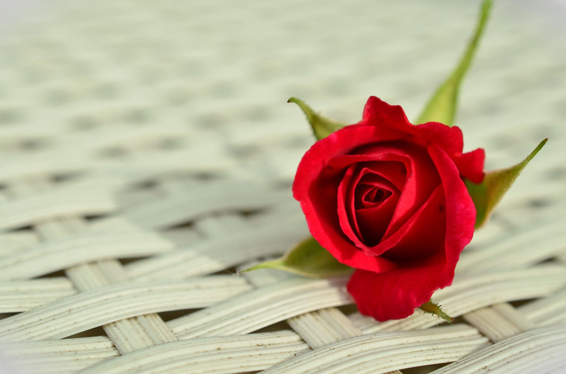 rito della rosa significato