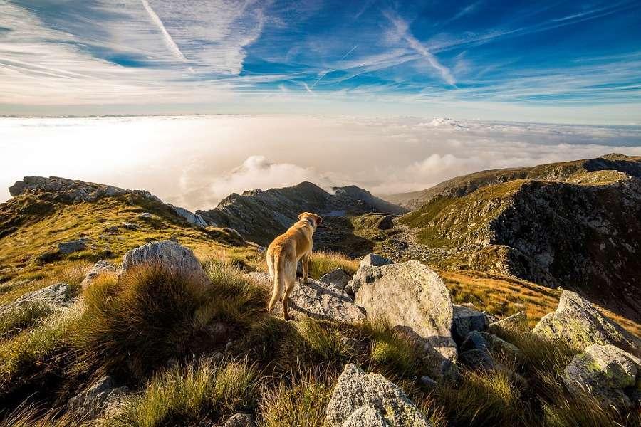 Vacanze in montagna con i cani