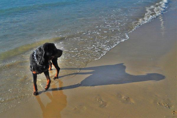 Bellaria cane mare